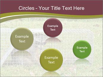 Raccoon PowerPoint Templates - Slide 77