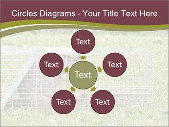Raccoon PowerPoint Templates - Slide 78