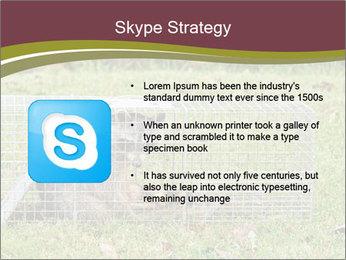 Raccoon PowerPoint Templates - Slide 8