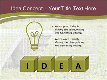 Raccoon PowerPoint Templates - Slide 80