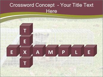 Raccoon PowerPoint Templates - Slide 82