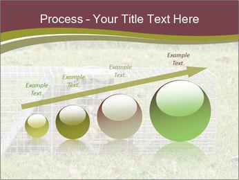 Raccoon PowerPoint Templates - Slide 87