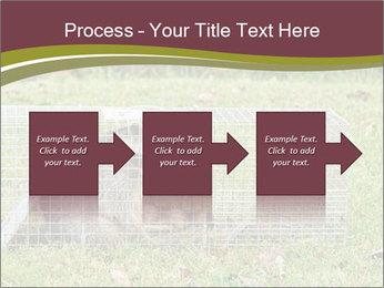 Raccoon PowerPoint Templates - Slide 88