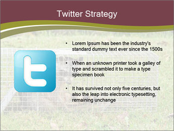 Raccoon PowerPoint Templates - Slide 9