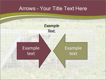 Raccoon PowerPoint Templates - Slide 90