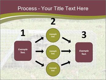 Raccoon PowerPoint Templates - Slide 92