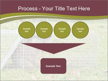 Raccoon PowerPoint Templates - Slide 93