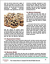 0000087839 Word Template - Page 4