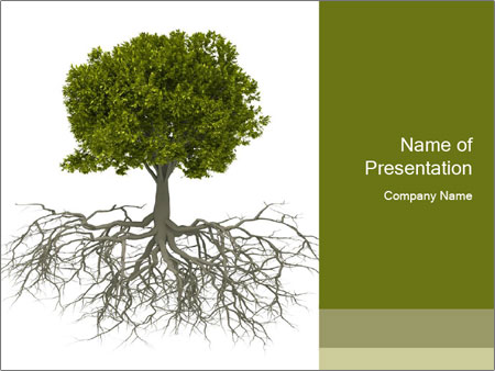 Tree with root PowerPoint Template