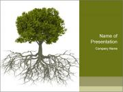 Tree with root PowerPoint Templates