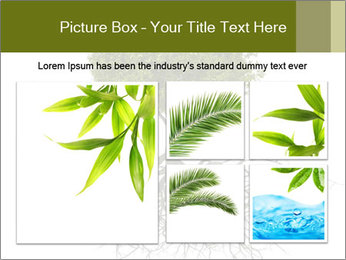 Tree with root PowerPoint Template - Slide 19