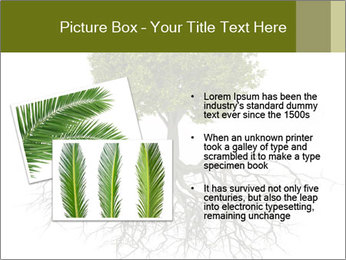 Tree with root PowerPoint Template - Slide 20