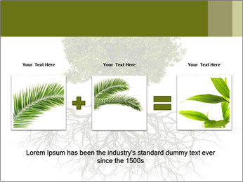 Tree with root PowerPoint Template - Slide 22