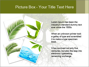 Tree with root PowerPoint Template - Slide 23