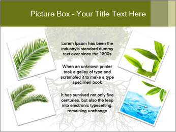 Tree with root PowerPoint Template - Slide 24