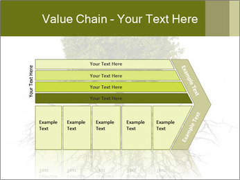 Tree with root PowerPoint Template - Slide 27