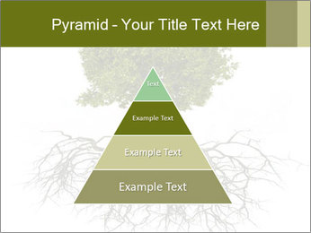 Tree with root PowerPoint Template - Slide 30