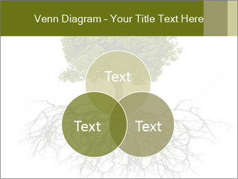 Tree with root PowerPoint Template - Slide 33