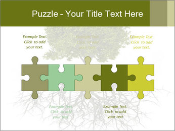 Tree with root PowerPoint Template - Slide 41