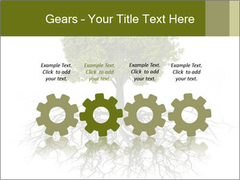 Tree with root PowerPoint Template - Slide 48