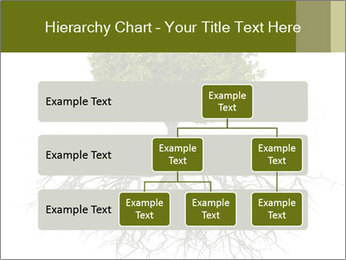 Tree with root PowerPoint Template - Slide 67