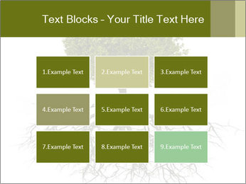 Tree with root PowerPoint Template - Slide 68