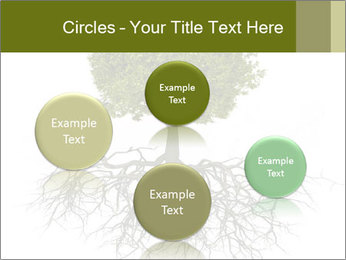 Tree with root PowerPoint Template - Slide 77