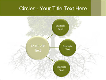 Tree with root PowerPoint Template - Slide 79