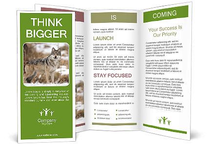 0000087852 Brochure Templates