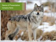 Mexican gray wolf PowerPoint Template