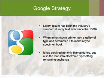 Mexican gray wolf PowerPoint Template - Slide 10