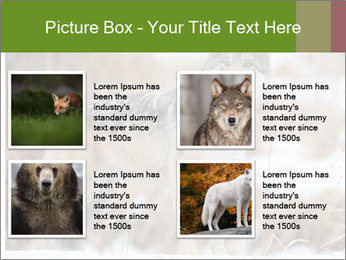 Mexican gray wolf PowerPoint Template - Slide 14