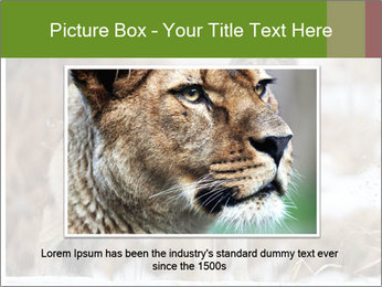 Mexican gray wolf PowerPoint Template - Slide 16
