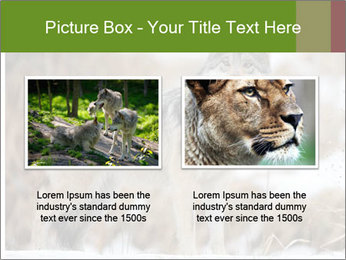 Mexican gray wolf PowerPoint Template - Slide 18