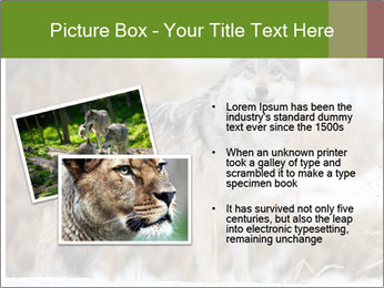 Mexican gray wolf PowerPoint Template - Slide 20