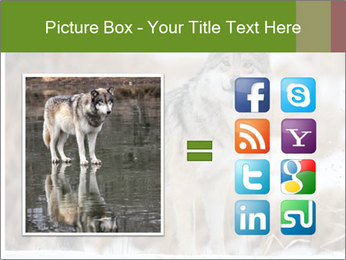 Mexican gray wolf PowerPoint Template - Slide 21