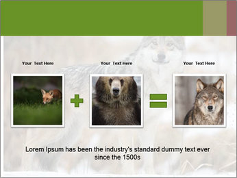 Mexican gray wolf PowerPoint Template - Slide 22