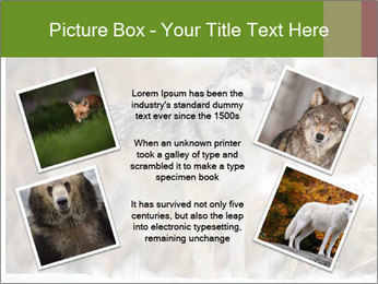 Mexican gray wolf PowerPoint Template - Slide 24