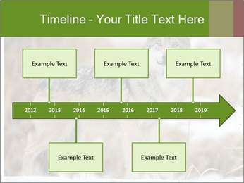 Mexican gray wolf PowerPoint Templates - Slide 28