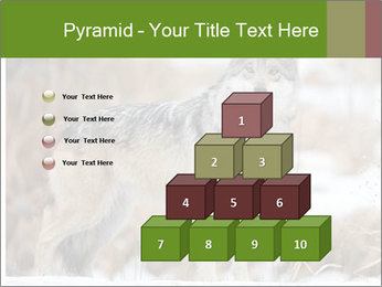 Mexican gray wolf PowerPoint Template - Slide 31