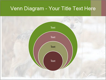 Mexican gray wolf PowerPoint Template - Slide 34