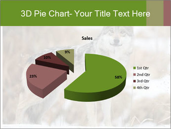 Mexican gray wolf PowerPoint Template - Slide 35