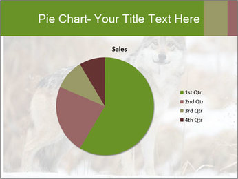 Mexican gray wolf PowerPoint Template - Slide 36