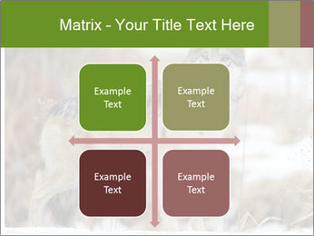 Mexican gray wolf PowerPoint Template - Slide 37
