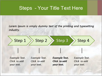 Mexican gray wolf PowerPoint Template - Slide 4
