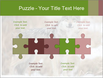 Mexican gray wolf PowerPoint Template - Slide 41