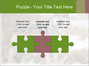 Mexican gray wolf PowerPoint Template - Slide 42