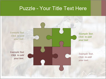 Mexican gray wolf PowerPoint Template - Slide 43