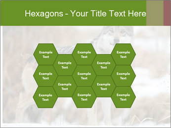 Mexican gray wolf PowerPoint Template - Slide 44