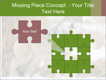 Mexican gray wolf PowerPoint Template - Slide 45